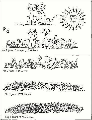 aantal katten na 4 jaar