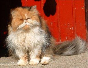 Naar: Bange en schuwe kat