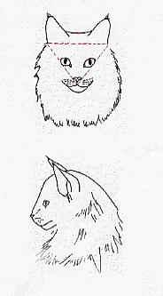 kopnoorseboskat1