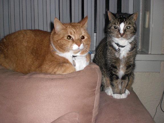 Timo en Raya
