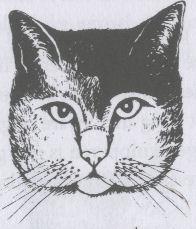 kattentaalgezicht1