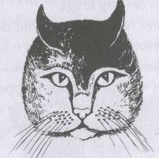 kattentaalgezicht2