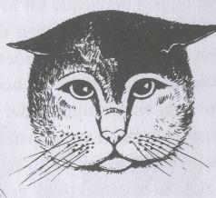 kattentaalgezicht3