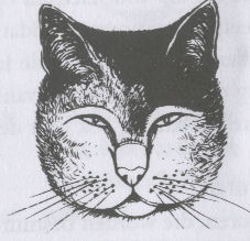 kattentaalgezicht5
