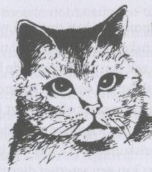 kattentaalogen1