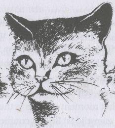 kattentaalogen2