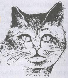 kattentaalogen3