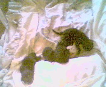 De-kittens-van-Indy