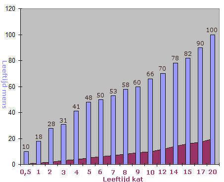 hoeveel eet een kat per dag