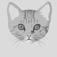 Naar: Kattentaal, gezicht