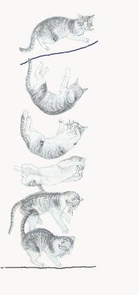 Vallende kat
