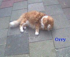 orrie