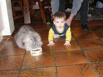 Naar: De kat en een baby
