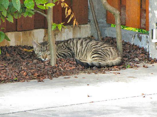 Wat te doen tegen katten in de tuin