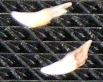 Tandjes uit het gebit van zorba