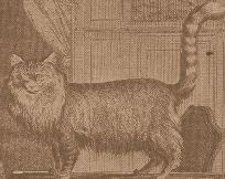 Turkse angora. Een afbeelding uit 1756