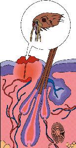 Ga naar: Giftigheid vlooien- en tekenmiddelen