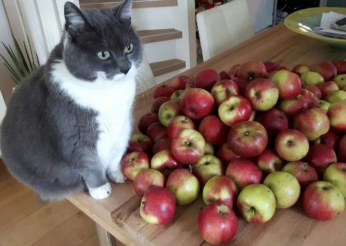 Sannah bewaakt de appels