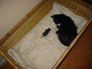 Kitten-nummer-1