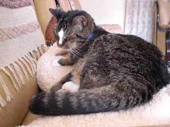 Stress Bij Verhuizing Weetjes Over Katten