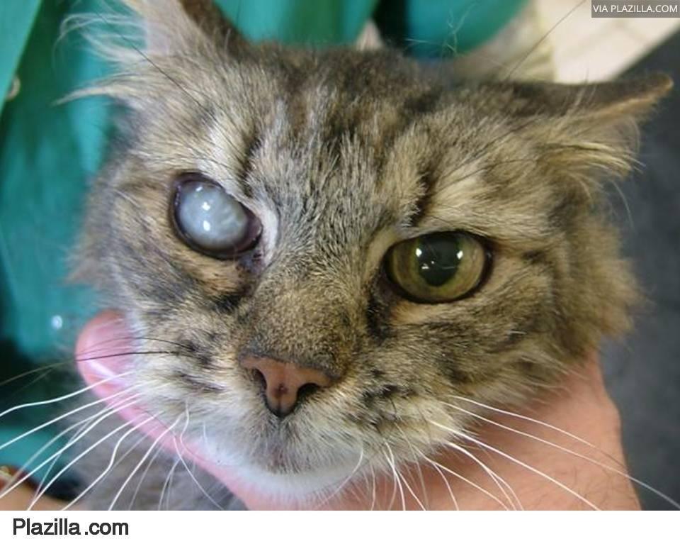 Naar: Grauwe staar (cataract)