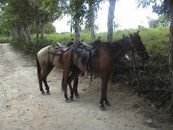 Het begon met de paarden