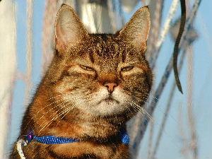 Naar: Kattentaal, praten