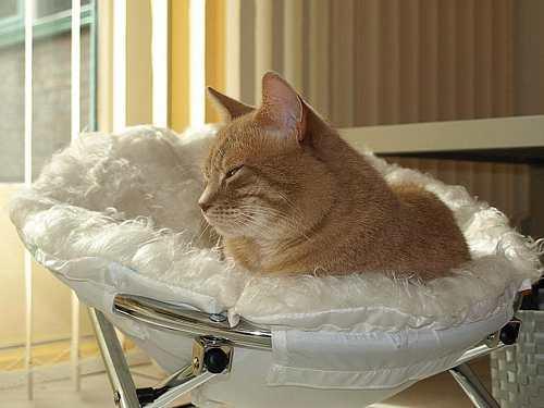 Mijn relax-fauteuil
