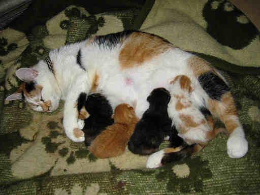 Ga naar: Verhalen over zwangerschap Met 4 kittens