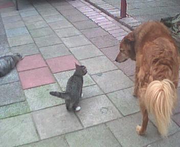 Naar: De kat heeft personeel