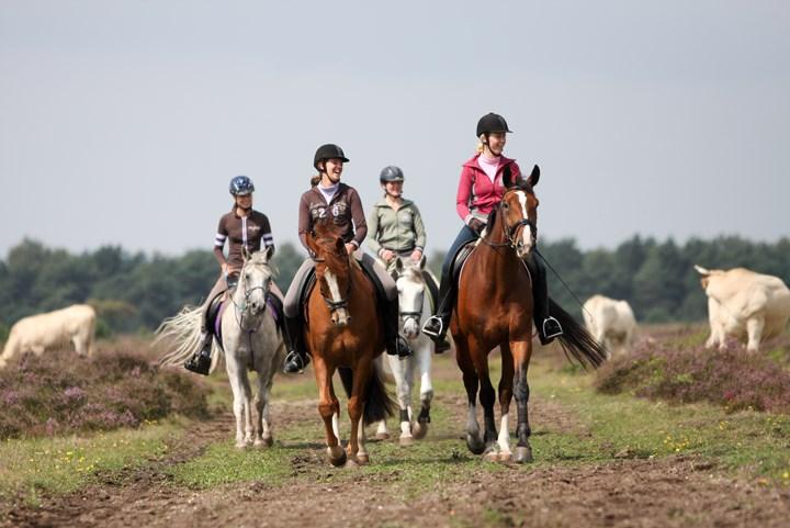 Op stap met je paard