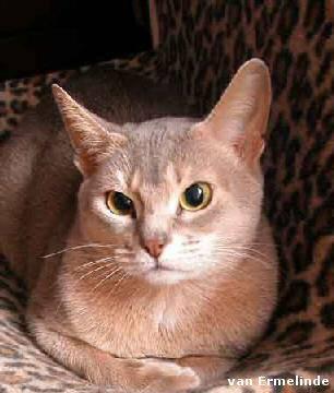 Naar: Aanschaf van een kat