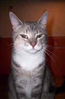 Naar: De magere kat