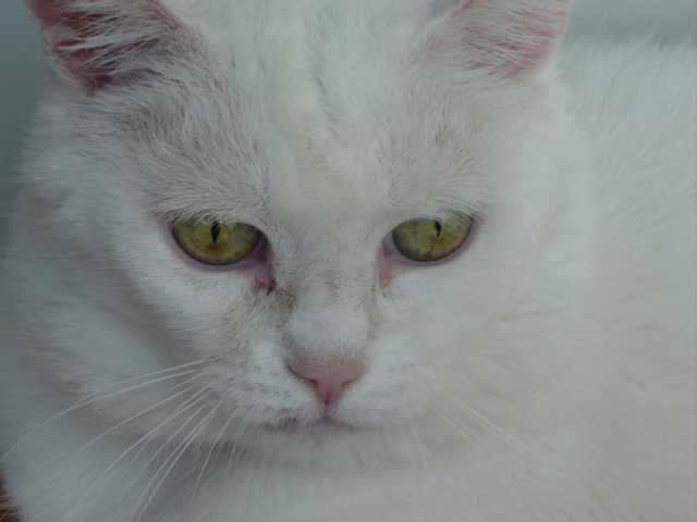 Naar: Training van de kat