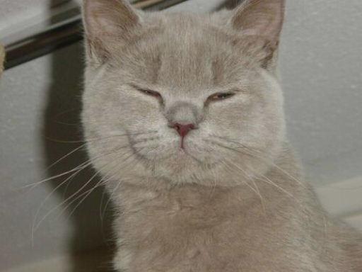 Naar: Depressieven kat