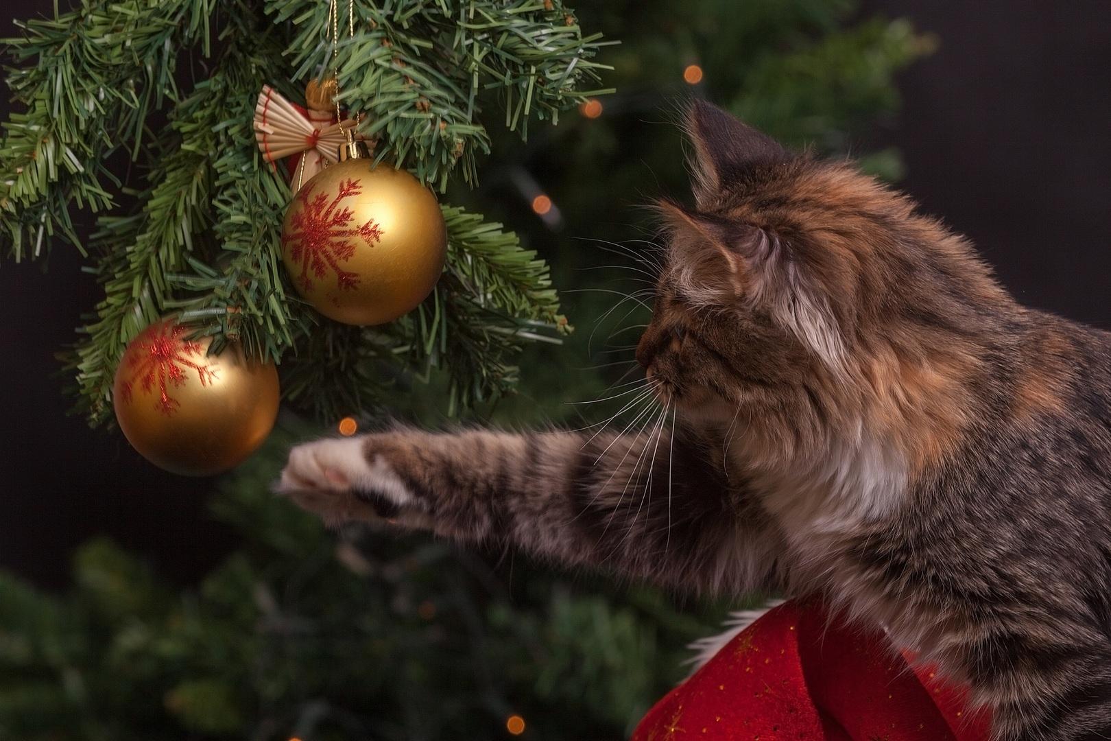 kat-kerstboom