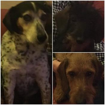 Teun Tygo en Lola