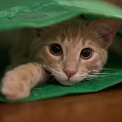 kattenhaar voor een heuptas