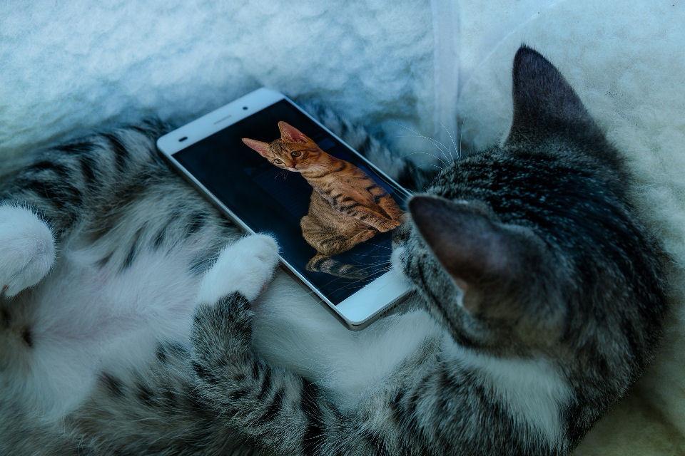 de-beste-katten-kunst-apps
