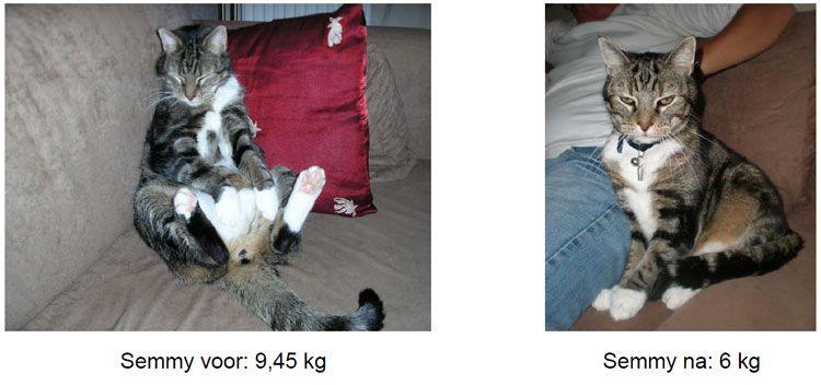 overgewicht-kat-voor-en-na