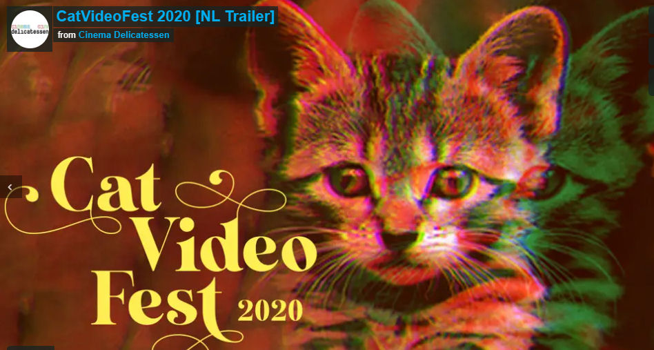 Cat videofest 2020