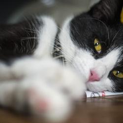 Kat van Anja koster