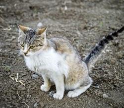 kat-poept-in-aarde-van-de-tuin