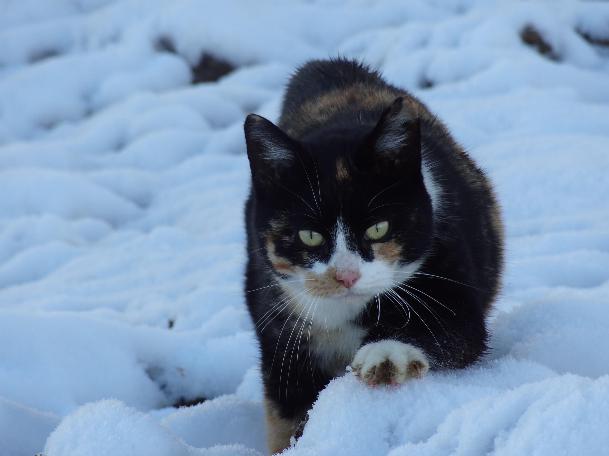 manon-de-wit-sprotje-in-de-sneeuw