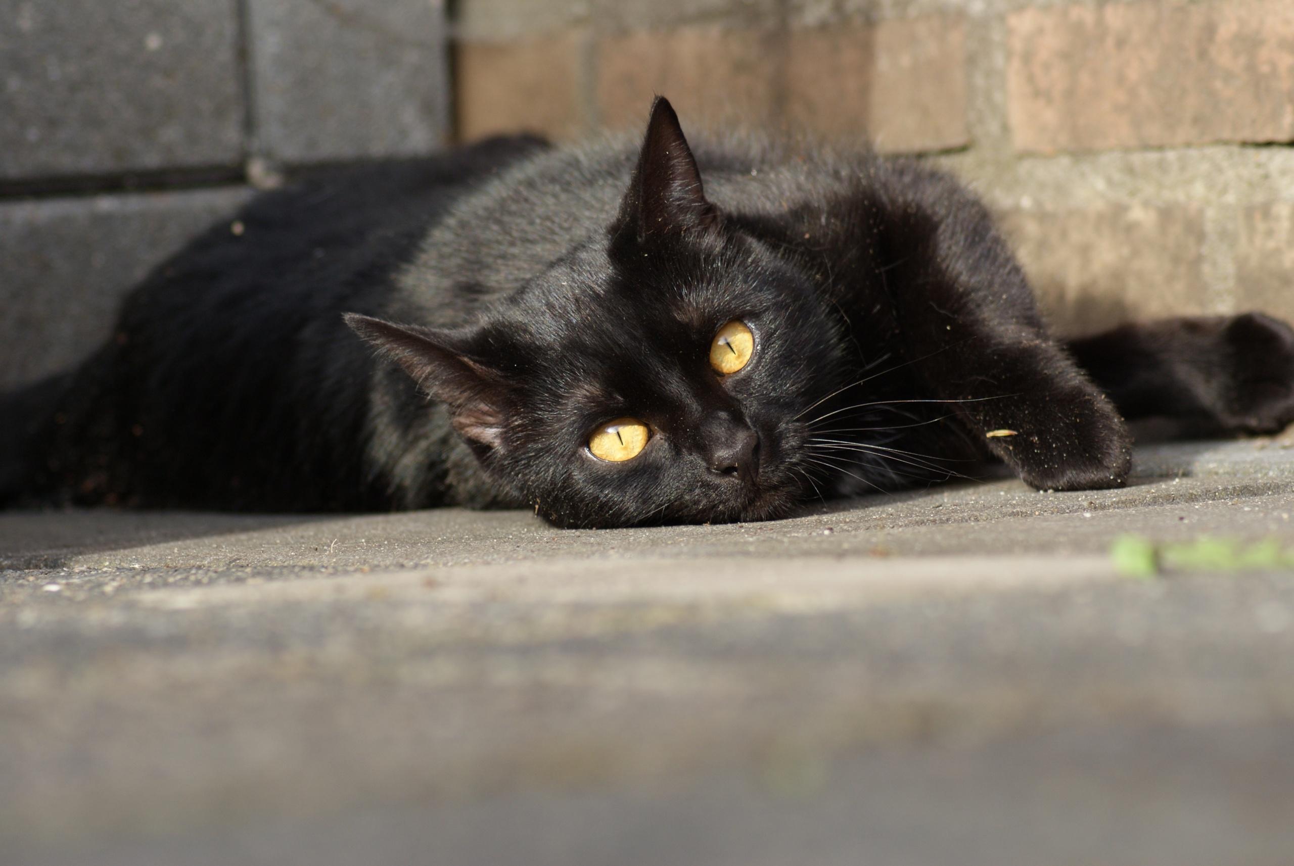 Kat van Mariska