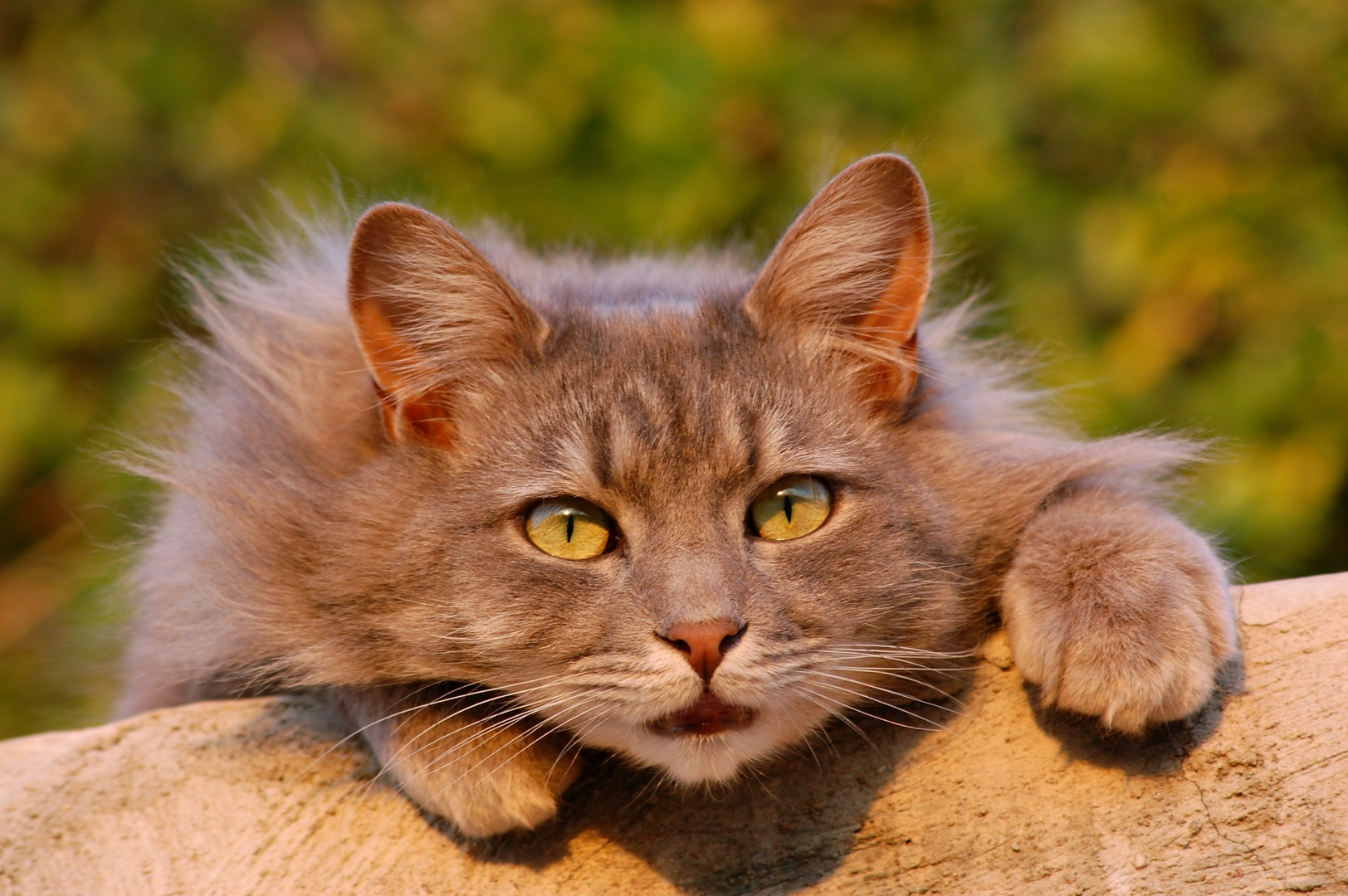 pet-kitten-cat-feline-mammal-fauna-1237479-pxhere.com