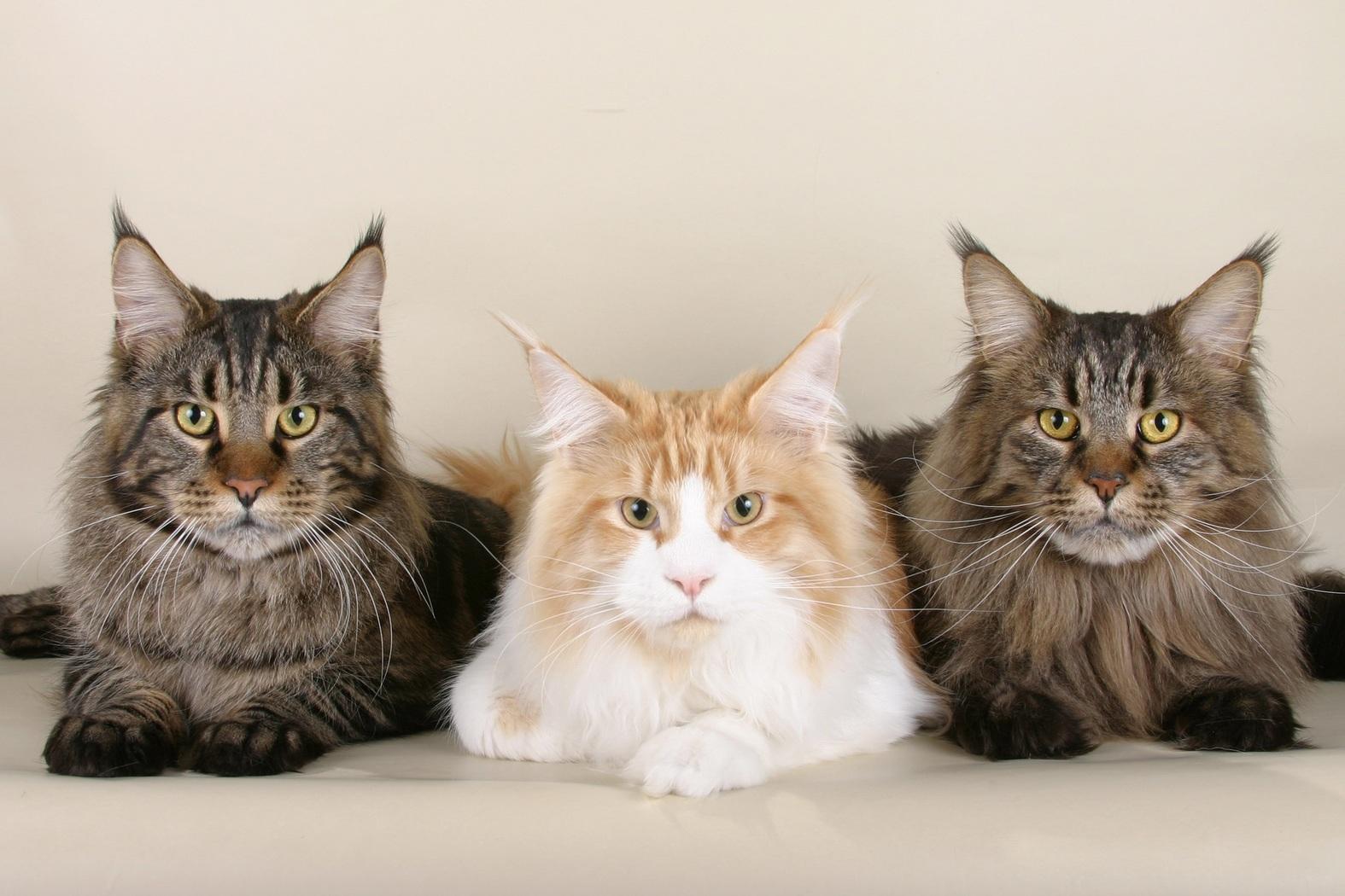 Prachtige katten