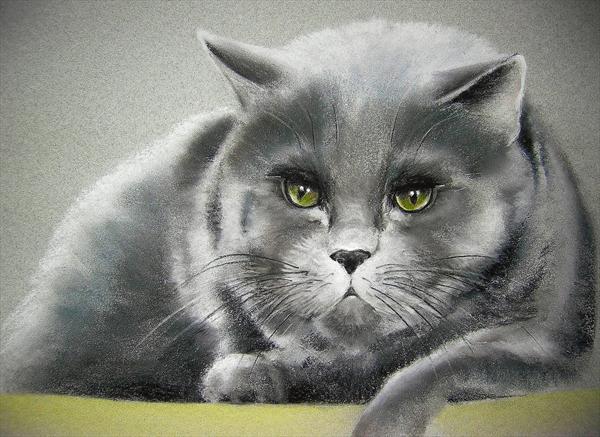 Carol-Webb-fat-Cat