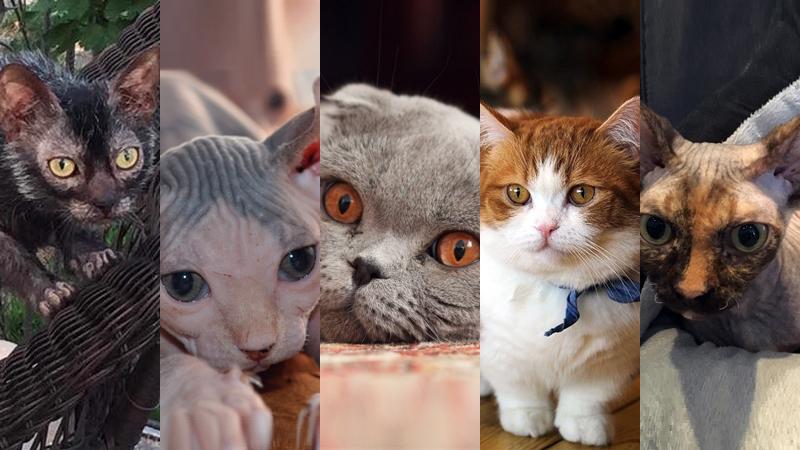 5 verboden katten