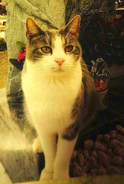 toldo-de-kat-die-zijn-baasje-bezoekt-op-het-graf